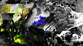 Michael Picke | Still | rabenschwarz wild