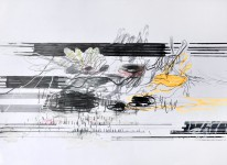 Michael Picke | Drawing | seerosen 03
